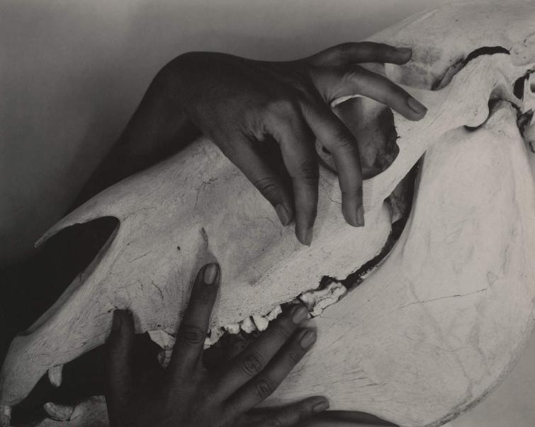 Stieglitz, Georgia O'Keeffe Hands and Horse Skull 1931 - via MoMA